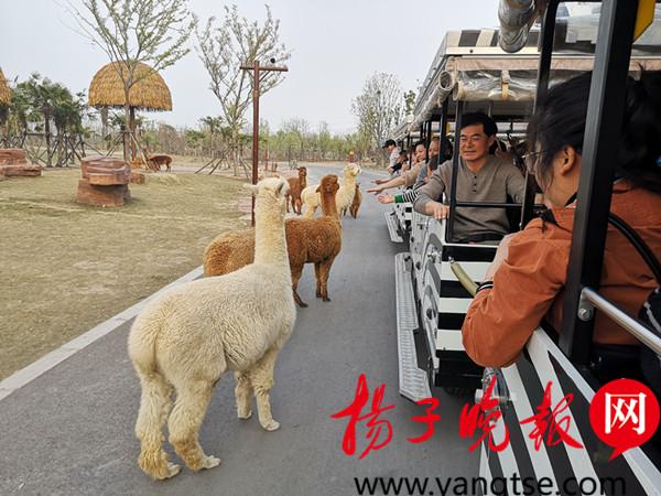 南通森林野生动物园挤爆了!万名游客涌来看珍奇